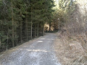 Fin skogssti