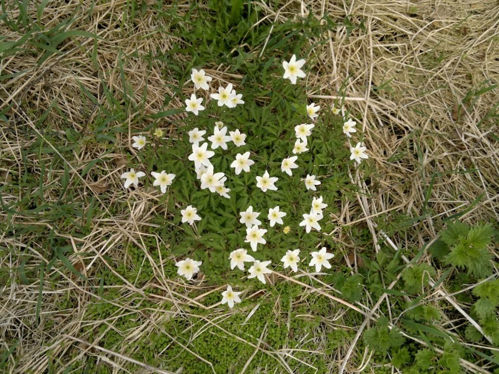 Vårens blomster