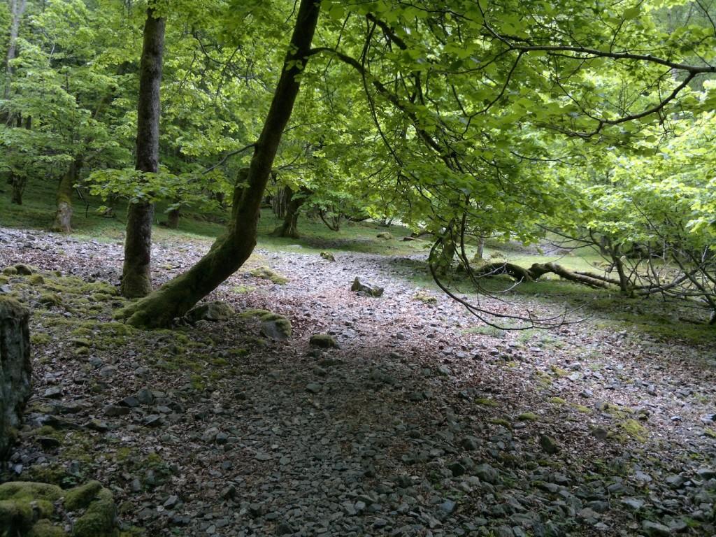 Gange i mye skog