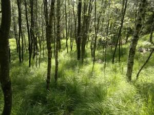 Små trær