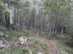 Skogsbunn på deler av turen