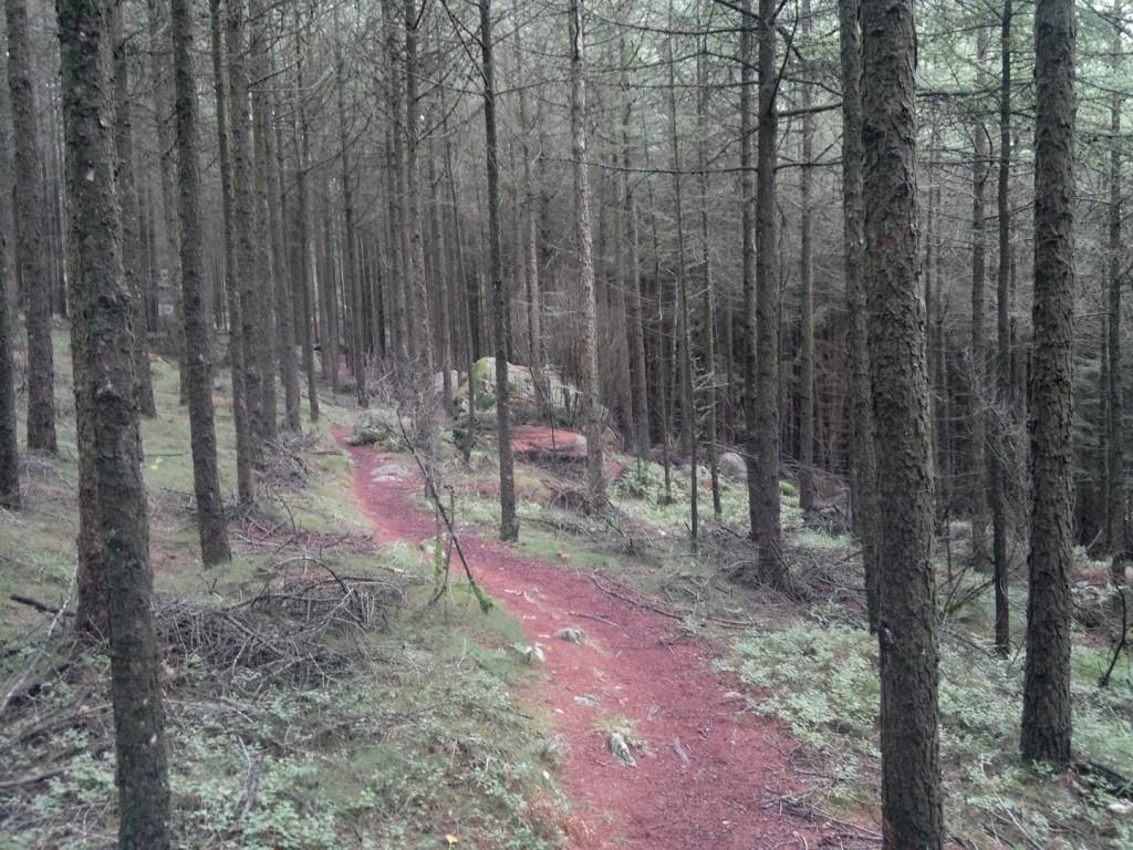 Skog og fin sti