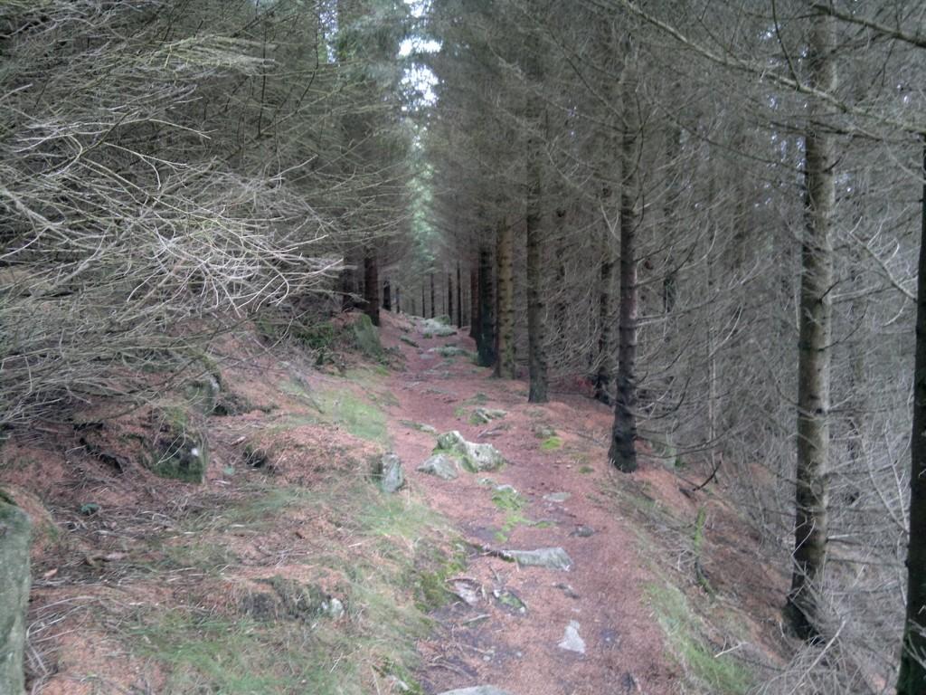Mer skog