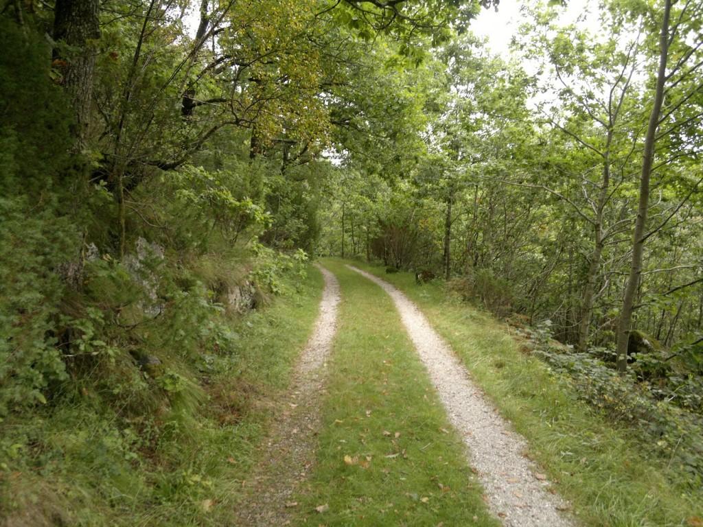 Skogsveien de siste 10-15 minuttene før du er fremme