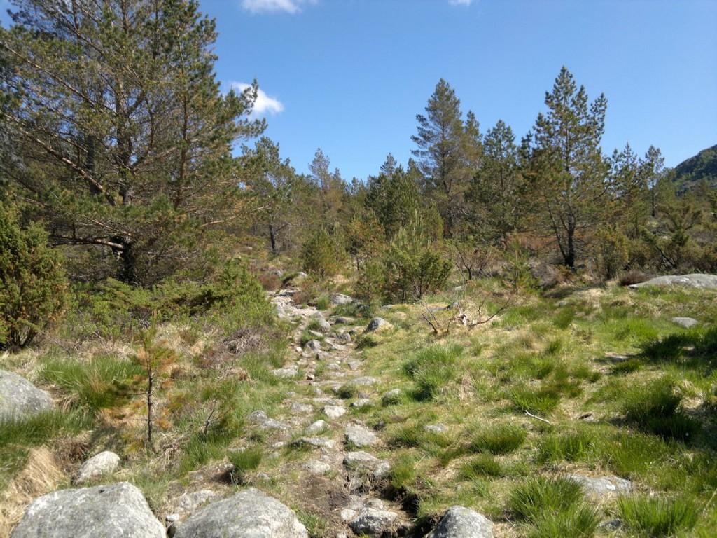 Tydelig sti der det er skogsunderlag