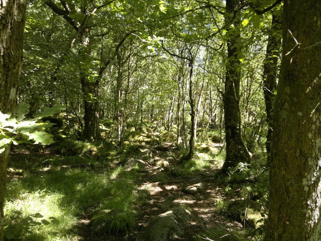 Både Eikeskog og annen skog