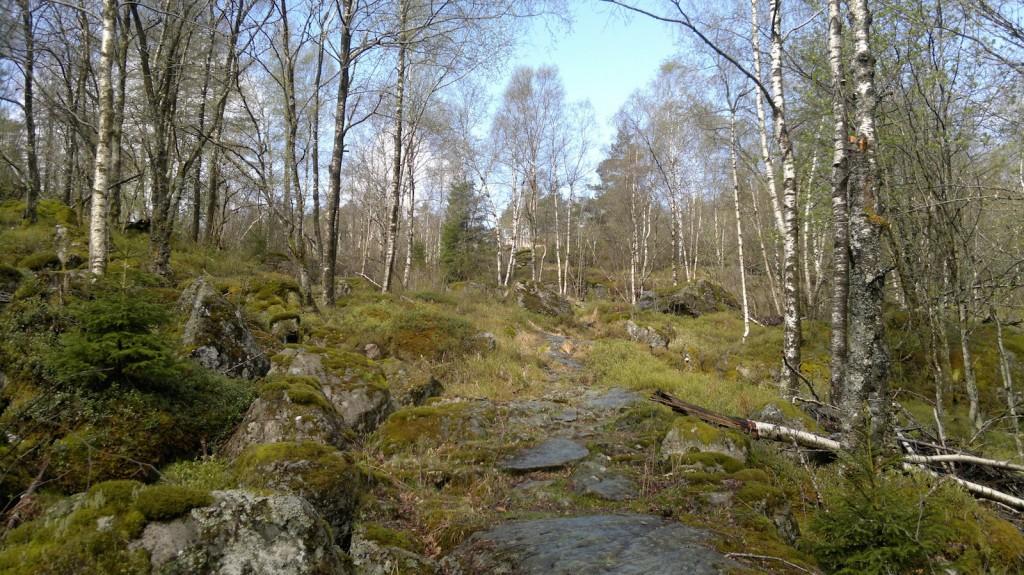 Etter få minutter er vi ute i skogen