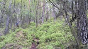 Skog og bærlyng