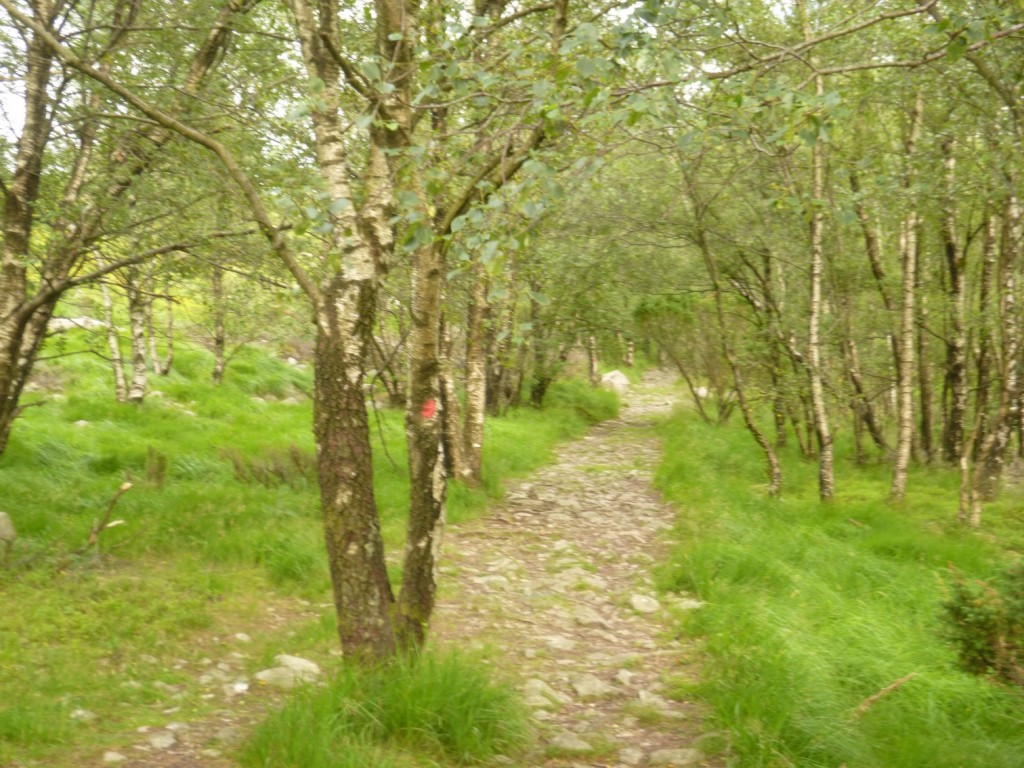 Skog på en del av turen