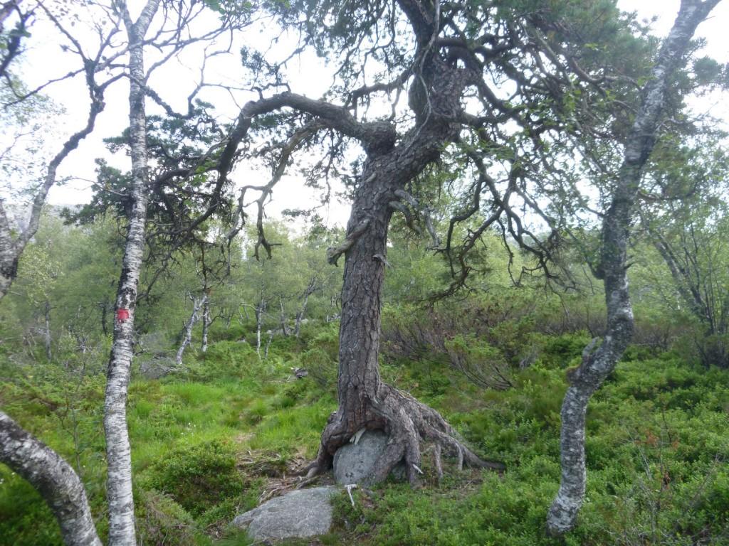 Hele treet