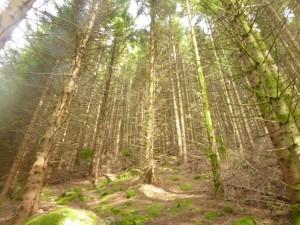 Bratt i skog