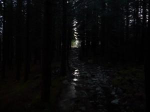 Skogstunell