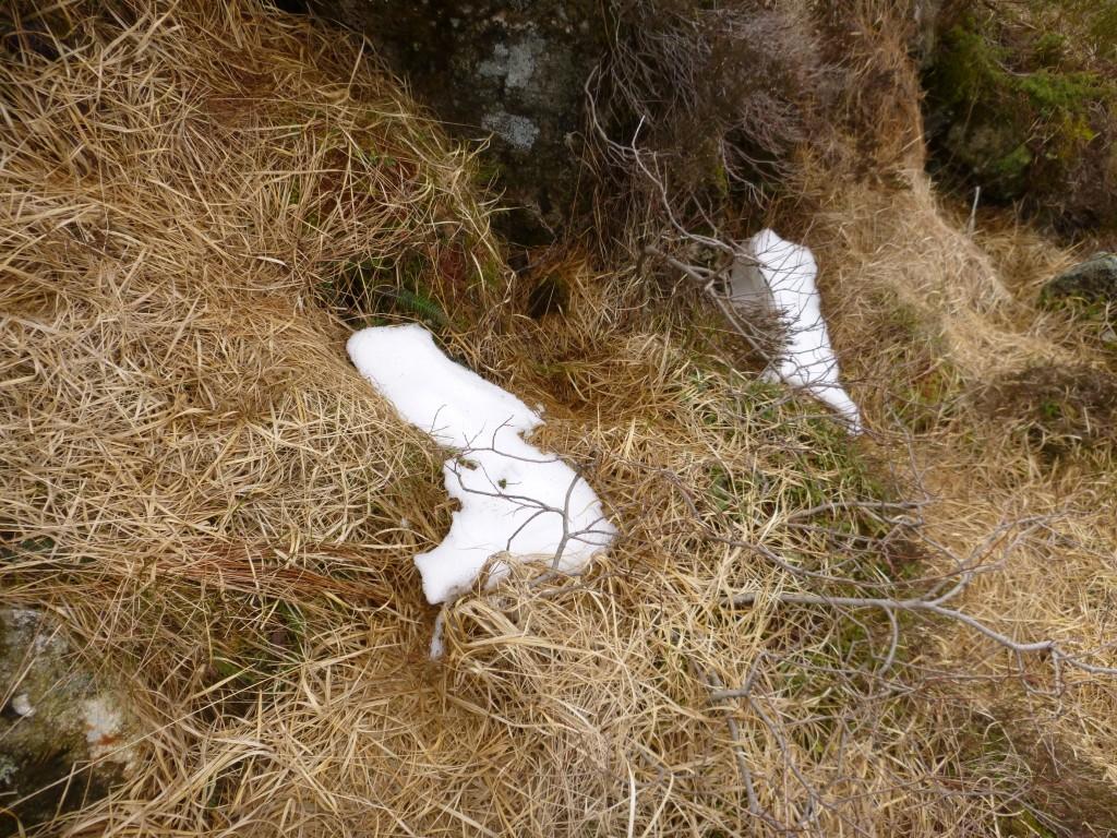 Skal vi si at det var rester av snø igjen ???