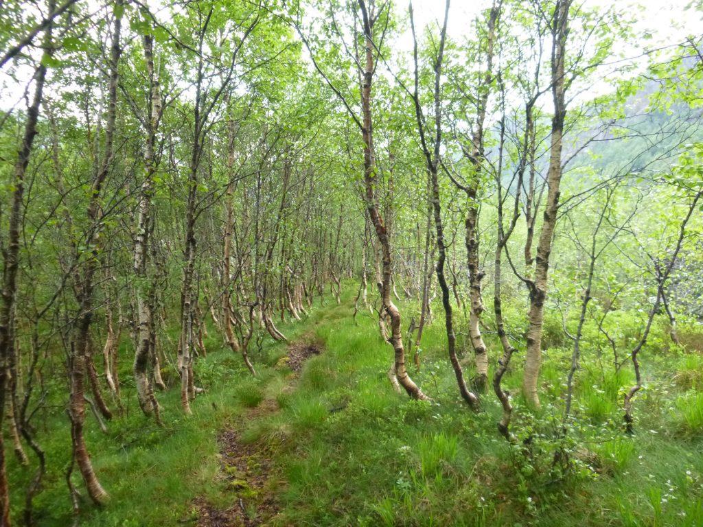 Kort tid før vi er tilbake i Ørsdalen