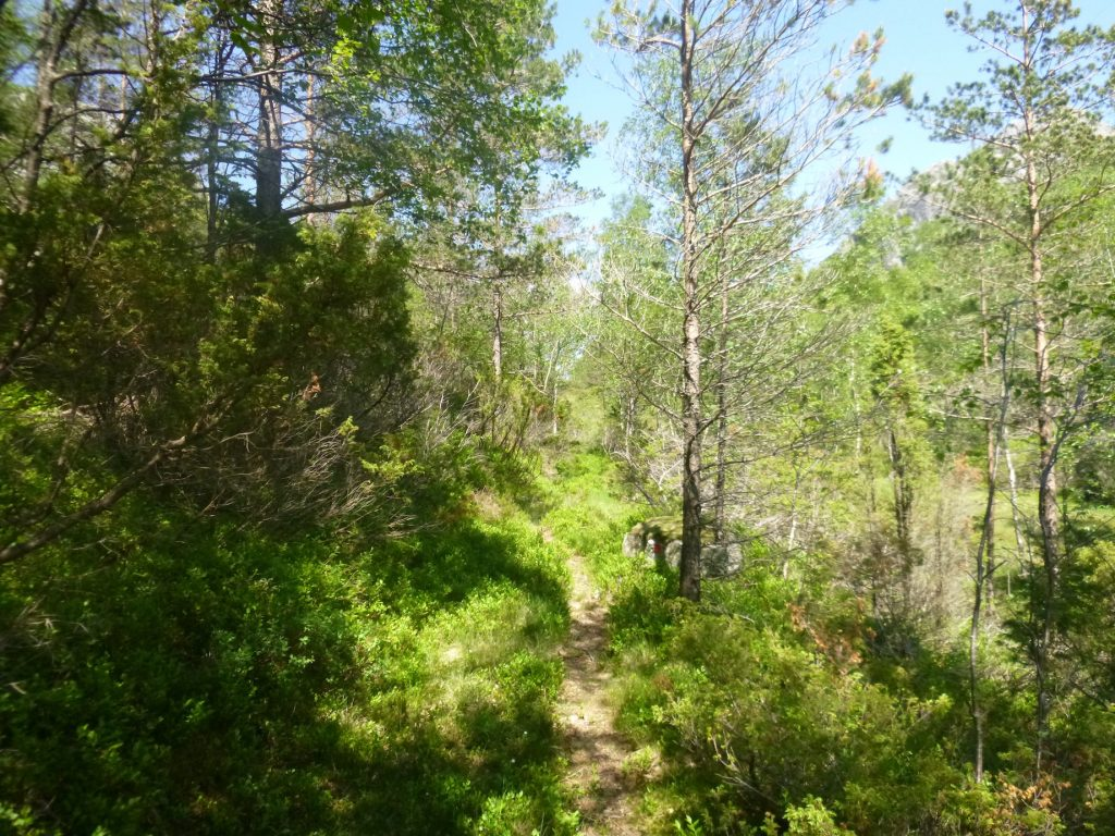 Fin skogstur
