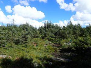 Barskog på Jæren
